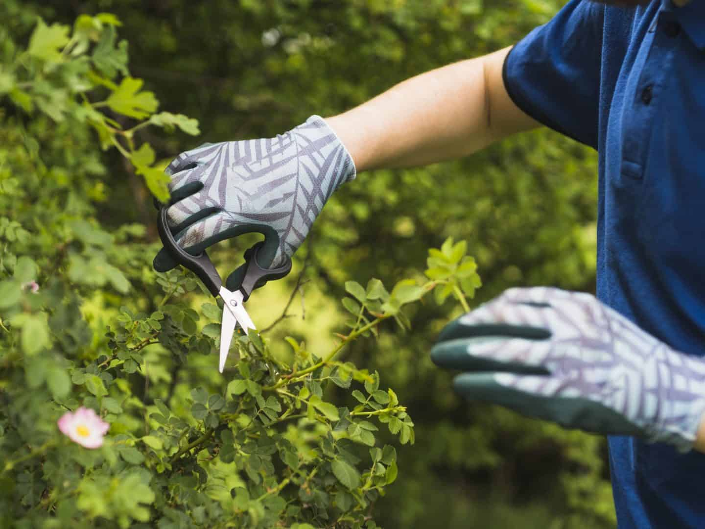 Male Gardener Pruning Hands Bush